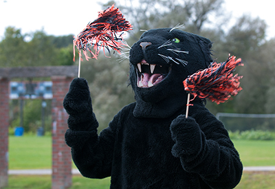 Panther with PomPoms_StoryImage
