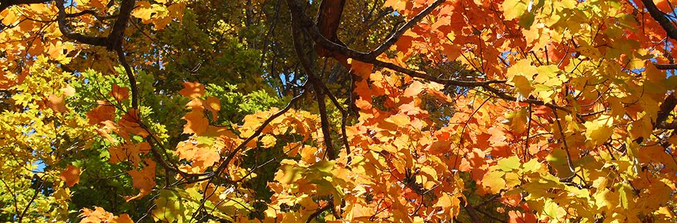 foliage_header