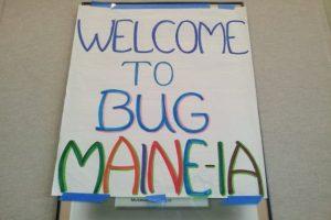 bug-maine-ia