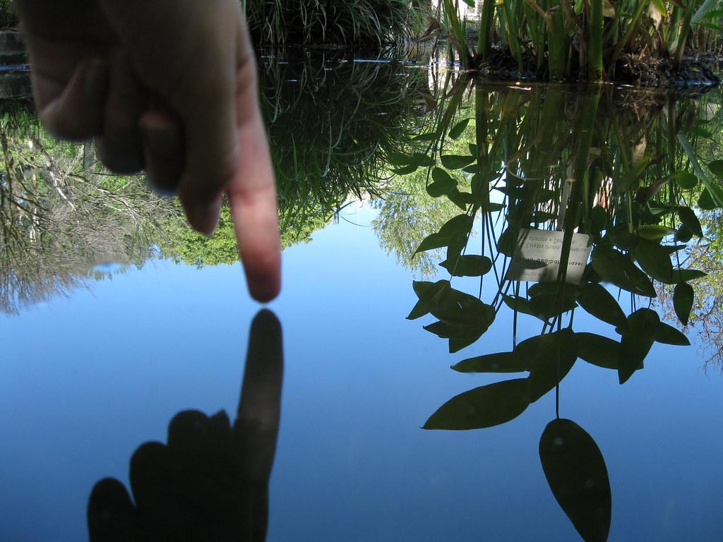 Botanical Garden - self reflection